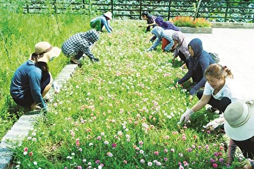 Cán bộ hội viên phụ nữ tham gia chăm sóc đoạn đường nở hoa
