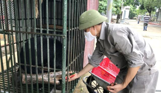 Chăm sóc một cá thể động vật hoang dã tại Trung tâm