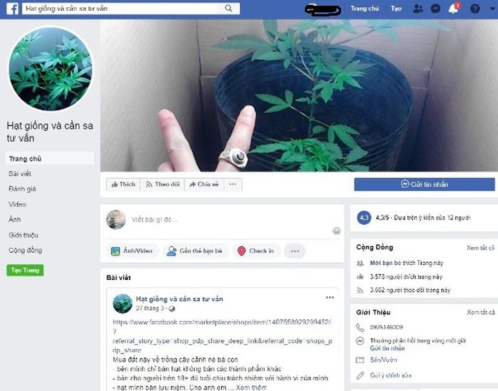 Một fanpage bán hạt giống cần sa công khai trên Facebook (ảnh chụp lúc 13h15 ngày 11-5)