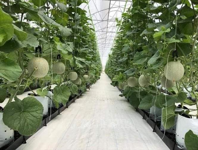 Ứng dụng công nghệ cao giúp phát triển nông nghiệp an toàn, thân thiện môi trường.