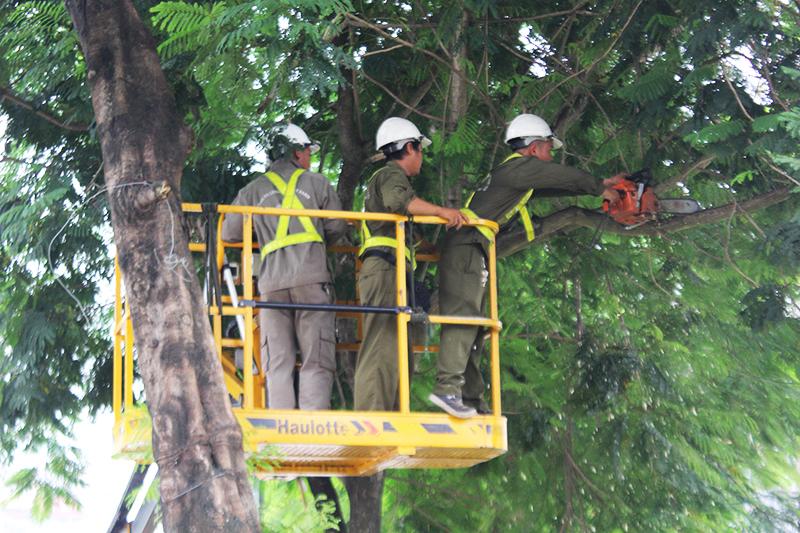 Kiểm tra, rà soát cắt tỉa các cây xanh trước mùa mưa bão.