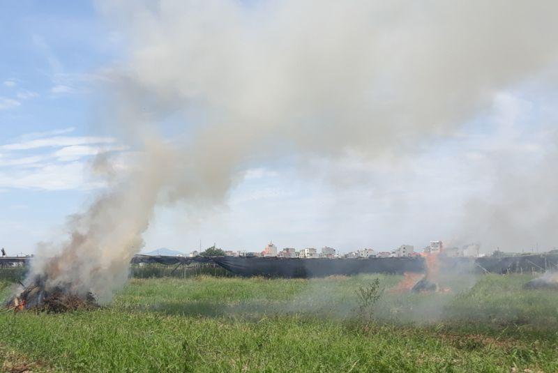 Rơm rạ, phụ phẩm nông nghiệp do người dân ở xã Đan Phượng (huyện Đan Phượng) gom lại để đốt.