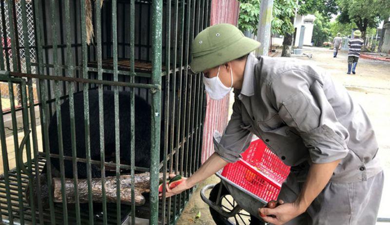 Trung tâm đã thực hiện cứu hộ cho nhiều loài động vật hoang dã nguy cấp.