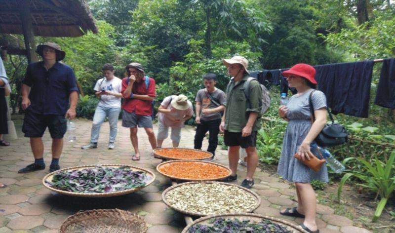 Du khách tham quan nhà thuốc tại Bản làng du lịch sinh thái Thái Hải