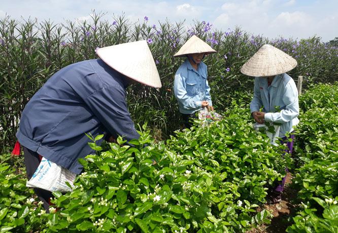 Mục tiêu tăng trưởng nông nghiệp trên 4%,