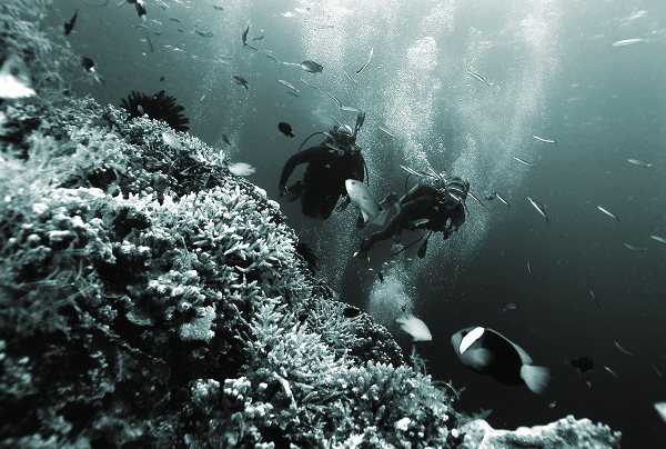 Dịch vụ lặn biển phổ biến tại Phú Quốc
