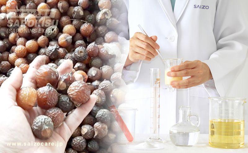 Theo kết quả nghiên cứu, quả bồ hòn có thành phần khoa học là Saponin, có đặc tính tạo bọt, tẩy rửa sạch, nhưng an toàn và không độc hại.