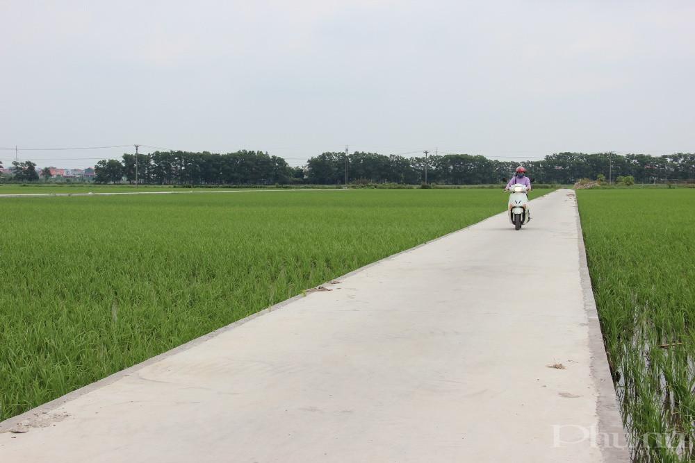 Con đường bê tông trắng muốt nằm xen kẽ giữa những khoảnh ruộng lúa xanh rì của xã Liên Hà (huyện Đông Anh, Hà Nội) có được là nhờ công cuộc xây dựng NTM.