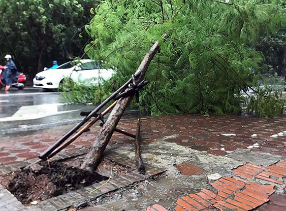 Cây gãy đổ do mưa bão. (Ảnh minh họa)