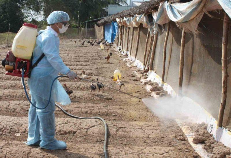 Đợt vệ sinh, khử trùng và tiêu độc môi trường phòng, chống dịch bệnh gia súc, gia cầm mùa mưa lũ năm 2020 sẽ được thực hiện từ ngày 10/8 đến 20/8.