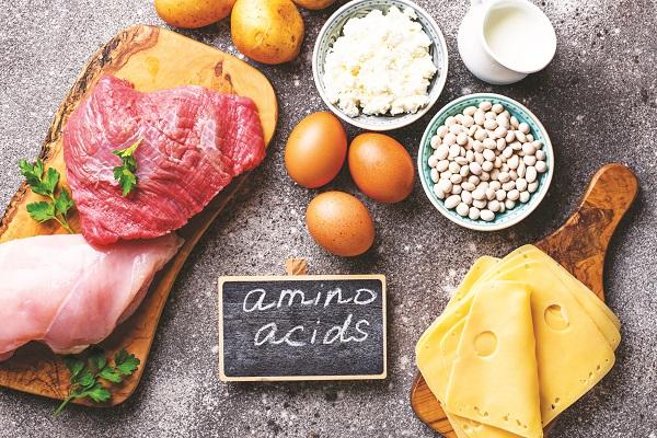 Axit amin từ lâu đã được khám phá với nhiều vai trò và chức năng sinh lý đối với cơ thể.