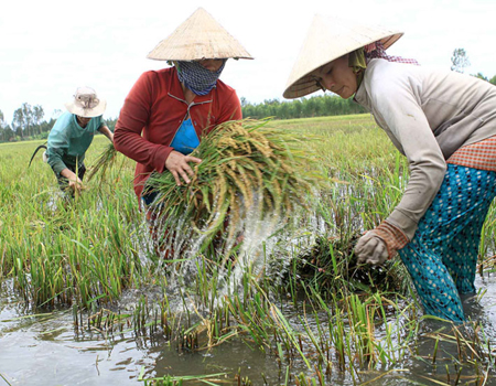 Ở Việt Nam, phụ nữ có vai trò rất quan trọng trong các hoạt động ứng phó với biến đổi khí hậu và giảm thiểu rủi ro thiên tai
