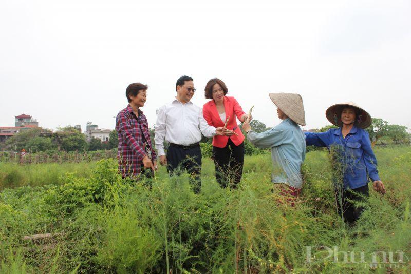 Các đại biểu tham quan mô hình trồng măng tây tại xã Yên Viên, huyện Gia Lâm
