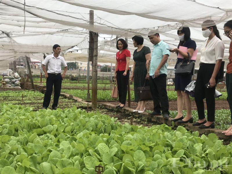 Các đại biểu tham quan mô hình trồng rau cải xanh tại xã Yên Viên