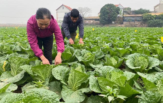 Những mô hình sản xuất nông nghiệp ứng dụng công nghệ cao