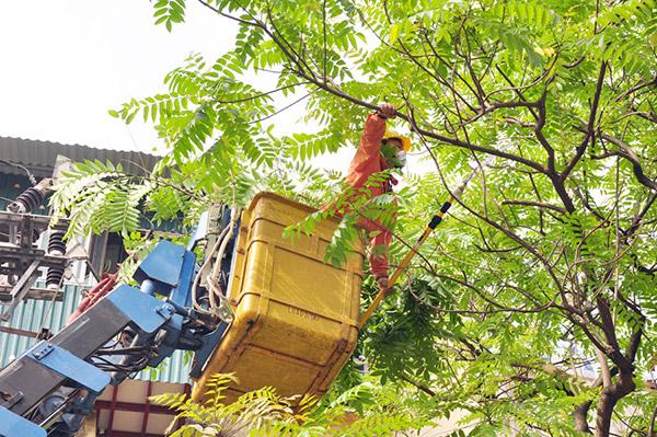 Công nhân Tổng công ty Điện lực Hà Nội cắt tỉa cây để bảo đảm an toàn hành lang lưới điện.