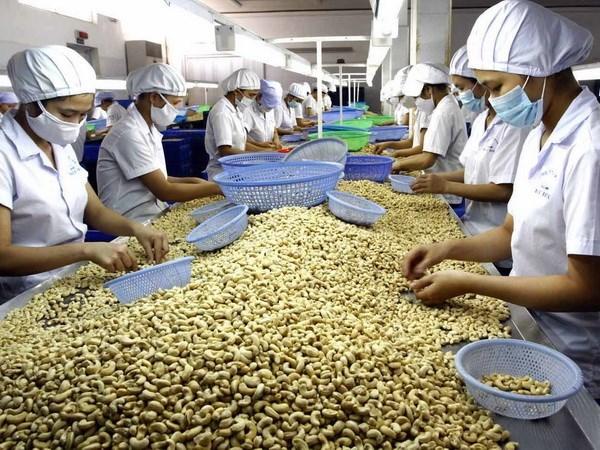 Hạt điều của Việt Nam xuất khẩu sang Peru