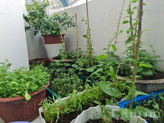 """Những """"vườn rau"""" đặc biệt của người trẻ tại thành phố hiện nay."""