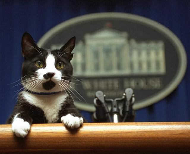 Chú mèo tên Socks của Tổng thống Bill Clinton
