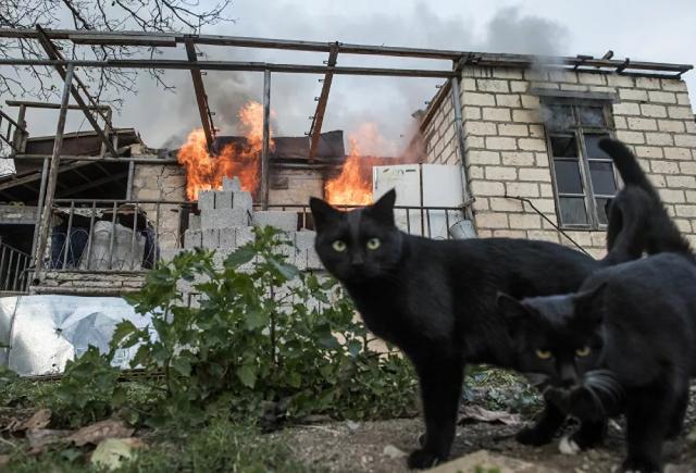 Hai chú mèo đen phía trước ngôi nhà đang bốc cháy ở làng Karegakh ở Nagorno-Karabakh.