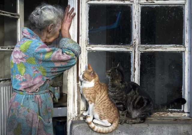 Hai chú mèo bên cạnh ngôi nhà của một bà lão ở thị trấn Lachin (Berdzor), Nagorno-Karabakh