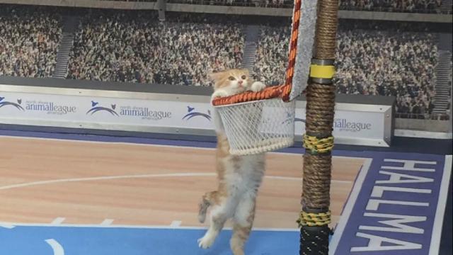 Chú mèo này đang làm