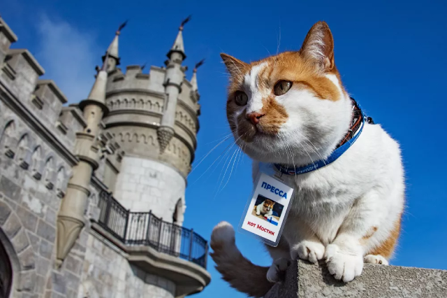 Mèo Mostik nổi tiếng - biểu tượng quá trình xây dựng cầu Crưm.