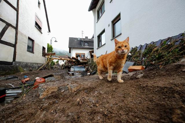 Chú mèo sống sót sau trận lũ lớn ở Schulda, Đức.