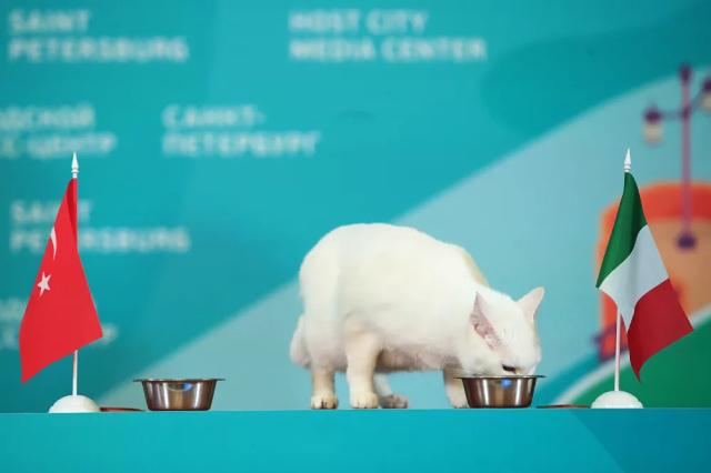 Mèo tiên tri Achilles của Bảo tàng Hermitage (Nga) dự đoán chiến thắng của ĐTQG Italia tại EURO.