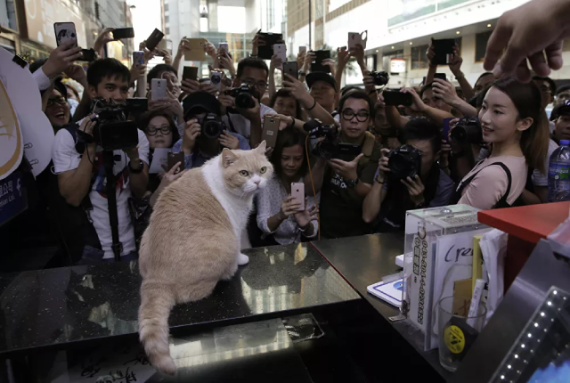 Các nhiếp ảnh gia và người hâm mộ chụp ảnh chú mèo nổi tiếng Brother Cream ở Hong Kong.