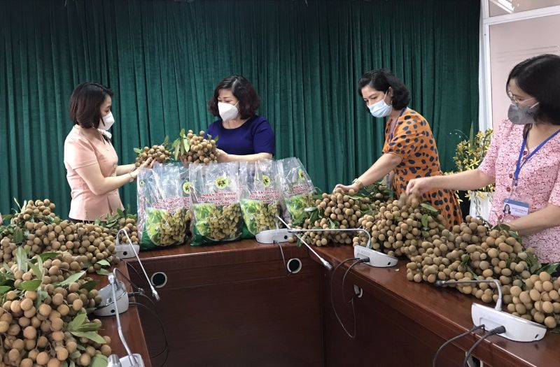 Nhãn chín muộn - đặc sản của huyện Quốc Oai được các cấp Hội hỗ trợ tiêu thụ
