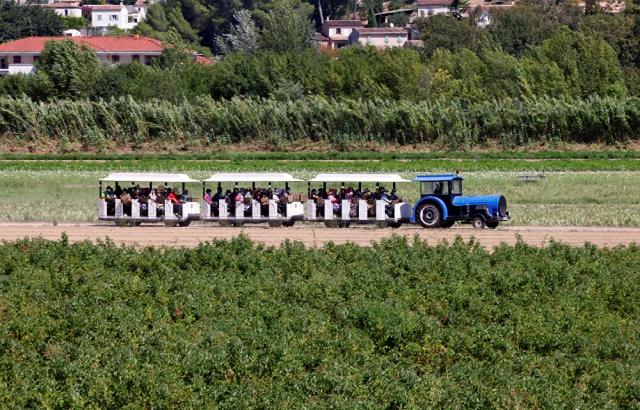 Xe thu hoạch hoa nhài tại Pháp.