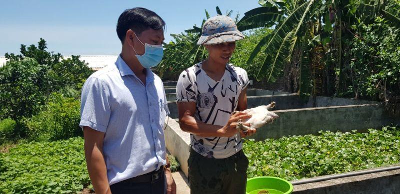Trang trại nuôi gà của gia đình anh Nguyễn Văn Sáu và anh Bùi Đức Xuất đang nuôi hơn 1 vạn con.(ảnh Vân Nga)
