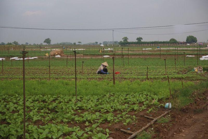 Những cánh đồng rộng bát ngát mang lại đời sống ấm no cho người dân