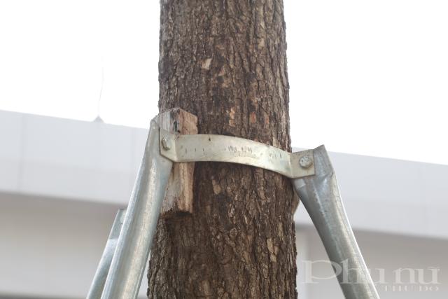 Chèn một miếng gỗ nhỏ vào thân cây là