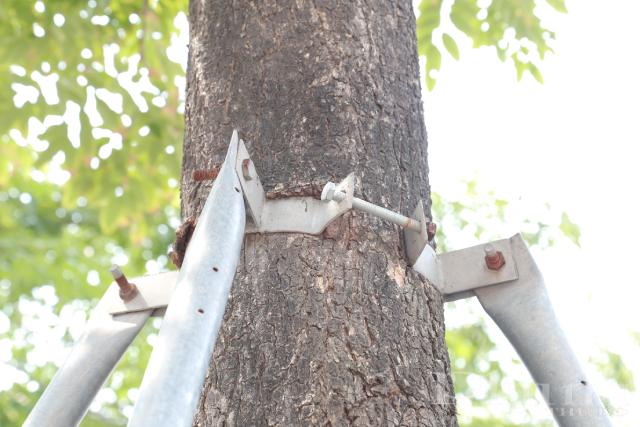 Vết lõm rất sâu tại một cây gần nhà số 16 đường Phạm Văn Đồng.