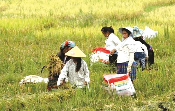 Phần lớn việc làm của phụ nữ DTTS là làm trong lĩnh vực nông nghiệp, thu nhập thấp. Ảnh: Nguyên Thanh